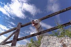 Ταξίδι με τα σκυλιά Στοκ Εικόνα