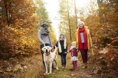 Ταξίδι στο δάσος κατά τη διάρκεια του φθινοπώρου στοκ φωτογραφία με δικαίωμα ελεύθερης χρήσης