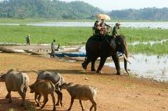 Ταξίδι της Ασίας, θερινές διακοπές, γύρος eco, ελέφαντας Στοκ Φωτογραφία