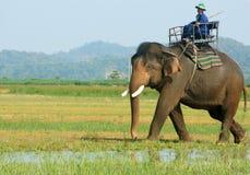 Ταξίδι της Ασίας, θερινές διακοπές, γύρος eco, ελέφαντας Στοκ Εικόνα