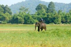 Ταξίδι της Ασίας, θερινές διακοπές, γύρος eco, ελέφαντας Στοκ Εικόνες