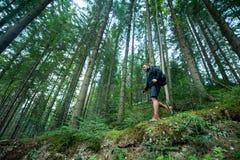 Ταξιδιώτης με τους περιπάτους πόλων οδοιπορίας στο δάσος βουνών Στοκ φωτογραφία με δικαίωμα ελεύθερης χρήσης