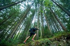 Ταξιδιώτης με τους περιπάτους πόλων οδοιπορίας στο δάσος βουνών Στοκ Εικόνα