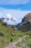Ταξιδιώτης στα βουνά, οδοιπορία Salkantay, Περού, Νότια Αμερική στοκ φωτογραφία με δικαίωμα ελεύθερης χρήσης