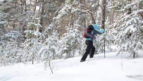 Ταξιδιώτης με τα ραβδιά σακιδίων πλάτης και πεζοπορίας Η γυναίκα στο δάσος σε ένα υπόβαθρο των χιονισμένων δέντρων φιλμ μικρού μήκους