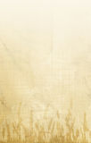 ταπετσαρία καλαμποκιού Στοκ Φωτογραφία