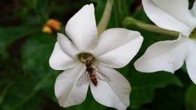 ταπετσαρία λουλουδιών Στοκ Εικόνα