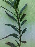 Ταπετσαρία πράσινη Στοκ Φωτογραφία