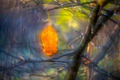 ταπετσαρία φθινοπώρου, όμορφα χρώματα στοκ εικόνα