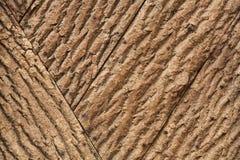 Ταπετσαρία φλοιών δέντρων Στοκ Φωτογραφίες