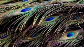 Ταπετσαρία Peacock Στοκ Φωτογραφίες