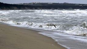 Ταραχώδη κύματα, μπλε θάλασσα Στοκ εικόνες με δικαίωμα ελεύθερης χρήσης