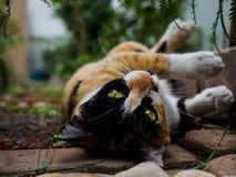 Ταρταρούγα και άσπρη γάτα Στοκ εικόνες με δικαίωμα ελεύθερης χρήσης
