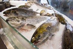Τασμανία salmons Στοκ φωτογραφία με δικαίωμα ελεύθερης χρήσης