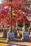 Ταφόπετρες και κόκκινη βαλανιδιά στο νεκροταφείο του Όουκλαντ, Ατλάντα, ΗΠΑ Στοκ Φωτογραφίες