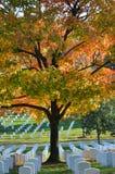 Ταφόπετρες στο εθνικό νεκροταφείο του Άρλινγκτον - Washington DC στοκ εικόνες