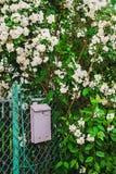 Ταχυδρομική θυρίδα κάτω από jasmine Στοκ φωτογραφία με δικαίωμα ελεύθερης χρήσης