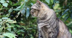Ταϊβάν, διάσημη έλξη, χωριό γατών γατών πιθήκων, καλός τιγρέ, καλλωπισμός γατών, απόθεμα βίντεο