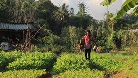 Ταϊλανδική γυναίκα που ποτίζει το οργανικό φυτικό αγρόκτημά της με τη χρησιμοποίηση και ζυγό και 2 δοχεία ποτίσματος απόθεμα βίντεο
