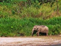 Ταϊλανδική ζωή ελεφάντων Στοκ εικόνες με δικαίωμα ελεύθερης χρήσης