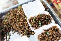 Ταϊλανδικοί τηγανισμένοι πρόχειρο φαγητό γρύλοι στοκ φωτογραφία με δικαίωμα ελεύθερης χρήσης