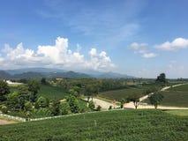 Ταϊλανδικός πράσινος τομέας τσαγιού στοκ εικόνα