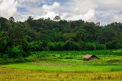 Ταϊλανδικός τομέας ρυζιού τοπίων φύσης με το εξοχικό σπίτι και τον όμορφους μπλε ουρανό και τα σύννεφα Στοκ Εικόνες