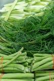 Ταϊλανδικό ανατολικό λαχανικό άνηθου αγγουριών φασολιών Yardlong μιγμάτων φυτικό στοκ εικόνες