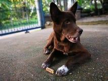 Ταϊλανδικό παραδοσιακό σκυλί στοκ φωτογραφία