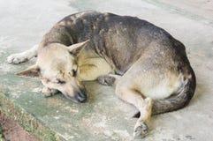 Ταϊλανδικό σκυλί ένας ύπνος επάνω στοκ φωτογραφίες