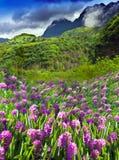 Ταϊτή. τομέας και βουνό λουλουδιών lupines Στοκ Εικόνες
