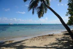 Ταϊτή Στοκ Εικόνα