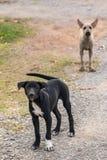 Ταϊλανδικά περιπλανώμενα σκυλιά κουταβιών στοκ φωτογραφία με δικαίωμα ελεύθερης χρήσης