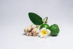 Ταϊλανδικά τρόφιμα, lemongrass, lemongrass στοκ εικόνα με δικαίωμα ελεύθερης χρήσης