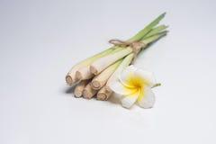 Ταϊλανδικά τρόφιμα, lemongrass, lemongrass Στοκ Εικόνα