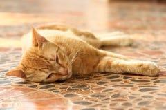 Ταϊλανδική γάτα Στοκ φωτογραφίες με δικαίωμα ελεύθερης χρήσης