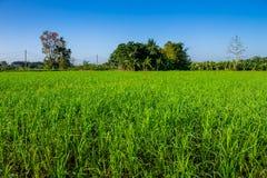 Ταϊλανδική γεωργία Στοκ Εικόνες