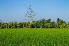 Ταϊλανδική γεωργία Στοκ φωτογραφία με δικαίωμα ελεύθερης χρήσης