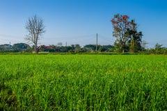Ταϊλανδική γεωργία Στοκ Εικόνα