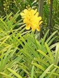 Ταϊλανδική ορχιδέα λουλούδι-04 Στοκ Εικόνες