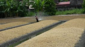 Ταϊλανδικοί λαοί που απασχολούνται στο πότισμα στις εγκαταστάσεις και το λαχανικό στον κήπο απόθεμα βίντεο