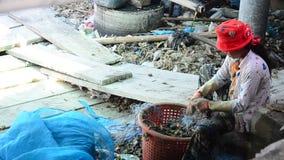 Ταϊλανδικοί λαοί που απασχολούνται στο τράβηγμα και τα επίλεκτα οστρακόδερμα από το δίχτυ ψαρέματος απόθεμα βίντεο
