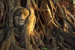 Ταϊλανδικός αρχαίος, εικόνα του Βούδα στο δέντρο Στοκ εικόνες με δικαίωμα ελεύθερης χρήσης