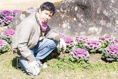 Ταϊλανδικό άτομο στο πορφυρό αγρόκτημα λάχανων Στοκ Εικόνα