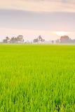 Ταϊλανδικό αγρόκτημα ρυζιού Στοκ φωτογραφίες με δικαίωμα ελεύθερης χρήσης