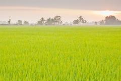 Ταϊλανδικό αγρόκτημα ρυζιού Στοκ φωτογραφία με δικαίωμα ελεύθερης χρήσης