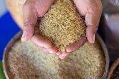 Ταϊλανδικό ρύζι Jusmine/Hawm Μαλί/ρύζι Jusmine/ρύζι Riceberry Στοκ Φωτογραφία