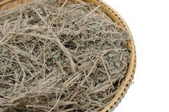 Ταϊλανδικό Artemisia ονόματος χορταριών επιστημονικό annua Λ Στοκ εικόνα με δικαίωμα ελεύθερης χρήσης