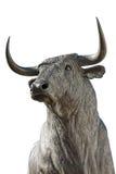 ταύρος Στοκ εικόνες με δικαίωμα ελεύθερης χρήσης