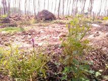 Τα άγρια πορφυρά λουλούδια στοκ φωτογραφία με δικαίωμα ελεύθερης χρήσης